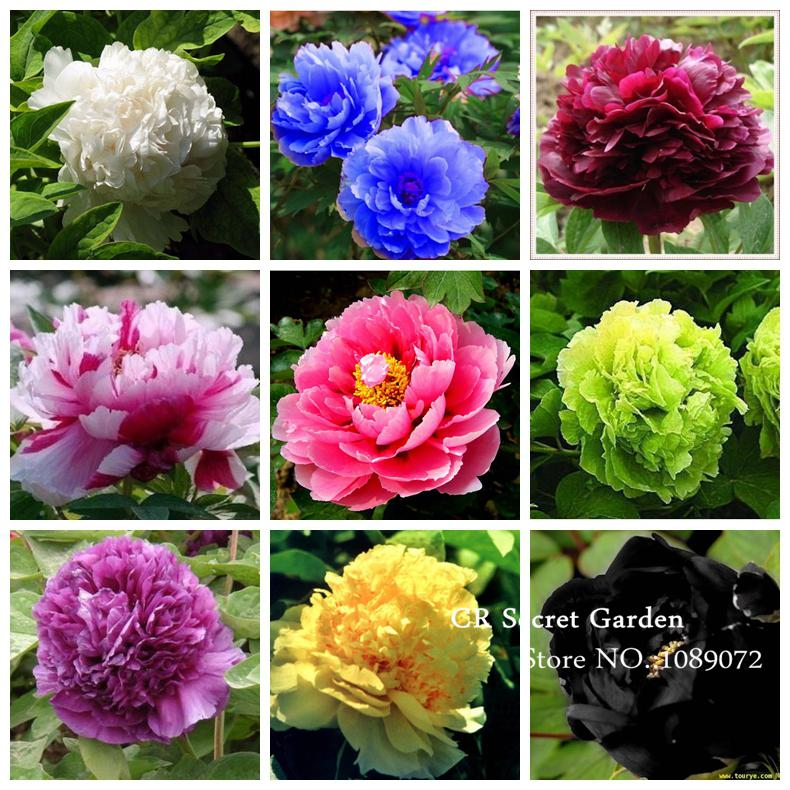 White flower farm coupon code free shipping qs hot deals product save with these current white flower farm coupons for september 2017 mightylinksfo