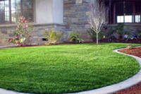 Wholesale less water low maintenance for landscaping gardening