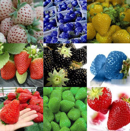 Wholesale 9 kinds of strawberry seeds Packs seeds balcony plants garden planting potted plants