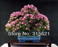 Bonsai Indoor Plants Yes 50pcs Bonsai Perfume Albizzia Flower Seeds Mimosa Seeds Potted Silk Tree Seeds Courtyard Tree Free Shipping
