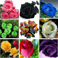 Wholesale This Ooder Include Packs Each Color Seeds Chinese Rose Seeds Rainbow Pink Black White Red Purple Green Blue Rose Seeds
