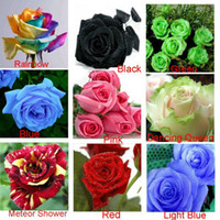 aluminum sow - 9 COLORS SEEDS ROSE SEEDS SEEDS EACH COLOR WITH FULLY SEALED ALUMINUM FOIL BAG WITH SOWING INSTRUCTION ONLY