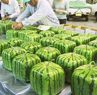 Wholesale SQUARE WATERMELON SEEDS SWEET FRUIT SEEDS NEW GENERATION SCARCE HOME GARDEN courtyard PRECIOUS HEIRLOOM