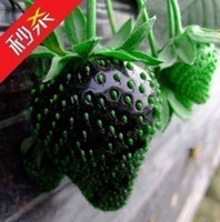 Wholesale 100 SEEDS HERMETIC PACKAGE BLACK STRAWBERRY SEEDS ONLY PLUS GIFT AND FRESH FRUIT SEEDS NON GMO VEGETABLE