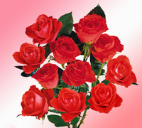 Wholesale Hot Sale Red Rose Seeds Seeds Per Package Red Color Garden Plants