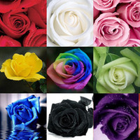 Wholesale China Rare Rose seeds Rainbow Red Yellow White Red Black Green Purple Blue Flower Lover s Gift