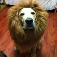 Wholesale Lovely Makeup Lion s Mane Gold Retriever Dog Hat Popular Stuffed Plush Toy Hat for Pet Animal Masquerade Party Supply Let Your Doggy Be King