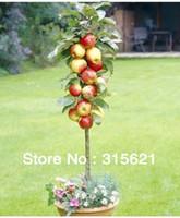 Tree Seeds Bonsai Outdoor Plants Free Shiping Bonsai Apple Tree Seeds (20 Pieces per bag)