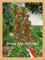Tree Seeds Bonsai Outdoor Plants Potted Fruit Seeds 800 Piece, German Latest Climbing Strawberry Seeds, A Powerful Warrior Vine, The Real Climbing Plants + Gift