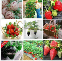 Wholesale 120pcs kinds strawberries seeds white black red yellow green blue pink orange purple strawberry home plants