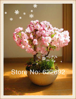 Tree Seeds Bonsai Indoor Plants Pretty Bonsai Little Plant, Mini Potted Pink Cherry Tree Seeds 30 Piece