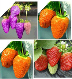 Wholesale On Sales kinds of strawberry seeds white yellow blue black red green great strawberries K07758
