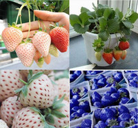 Fruit Seeds   Super 100pcs lot 10 kinds To Choose Home Diy Plant Strawberry Fragaria Vesca Fruit Flower Berry Seeds Free Shipping