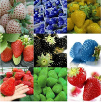 Fruit Seeds   Wholesale 100pcs lot 10 kinds To Choose Home Diy Plant Strawberry Fragaria Vesca Fruit Flower Berry Seeds Free Shipping