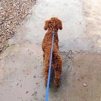 Wholesale S5Q Pet Dog Training leash With Adjustable Nylon P Leash Walking Lead Leading Collar AAACXC