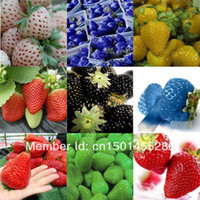 Tree Seeds Bonsai Outdoor Plants 9 kinds of strawberry seeds, 9 Packs 900 seeds, balcony plants, garden planting, potted plants