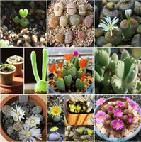 Tree Seeds Bonsai Outdoor Plants Mix Lithops Pseudotruncatella seeds Stone Flowers Bonsai plants Seeds for home & garden 100 Seeds bag Free shipping