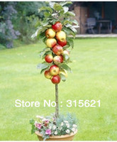 Tree Seeds Bonsai Outdoor Plants Free Shiping Bonsai Apple Tree Seeds (20 Pieces per bag)