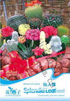 Wholesale 1 original packs total seeds Mixture Of Cactus Seeds Hot Sale balcony potted plants