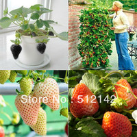 5 kinds Strawberry Seeds, 1 kind 200 pcs, total 1000 pcs, wh...