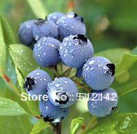 2015 Limited Promotion Herbs Plastic Pot Seeding Blue Berry ...