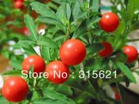 Cheap Free Shipping 6 pcs Indian ginseng seeds improve sleep function,enhance immunity, anti-fatigue
