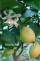 other   Pot Lemon Plants Tree Seeds High Survival Rate Bonsai Fruit Tree Seed (30Pieces) Free Shipping