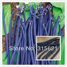 Wholesale Black Gold Kidney Bean Phaseolus Vulgaris L Seeds Home Garden Health Vegetable French Bean Seeds