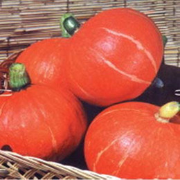 Wholesale Lovely Sweet Seed Green Healthy Red Delicious Sweet Pumpkin Seed K07952
