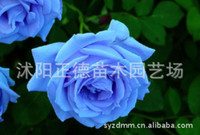 Wholesale Free delivery rose flower seed seed Colors Rose Seeds Plant Seed Colourful Flower Home Yard Garden Easy mg1