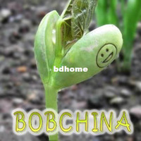 Decorative Flowers & Wreaths assorted beans - Hot Selling Jack s Magic Growing Message Beans Assorted English Word Wish Shape Smiling Face Bonsai Seed