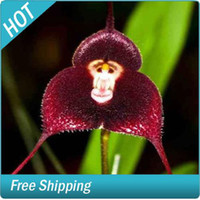 Wholesale 100pcs Flower pots planters Beautiful Monkey face orchids seeds Multiple varieties Bonsai plants See