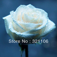 Wholesale FREE SHIP Seeds China Rare White Rose Flower To Lover ITEM LABEL ROSE3