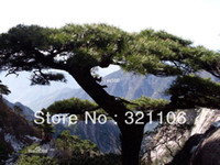 Wholesale MEDITERRANEAN CYPRESS TREE Green Spire Pencil Pine Indian Cedar Seeds