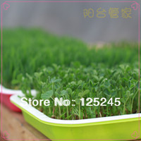 Wholesale Double layers plastic plate for wheatgrass or other vegetable sprouts growing purpose x26x4 cm