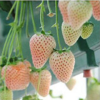 Fruit Seeds   100Pcs Bonsai Fragaria ananassa White Cream Strawberry Seeds Delicious and Beautiful Pot Fruit Seed Home Green Plants
