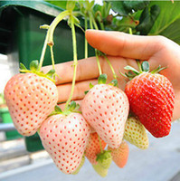 Fruit Seeds   50pcs Bonsai White Strawberry Seeds Beautiful Plant Delicious Fruit For Home Garden Table Green Plants Free shipping