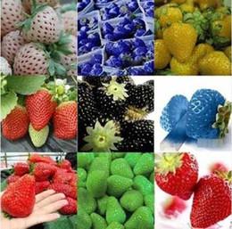 Nueva llegada 24 tipos de semillas de fresa, blanco, amarillo, azul, negro, rojo, verde, grandes fresas, K07758