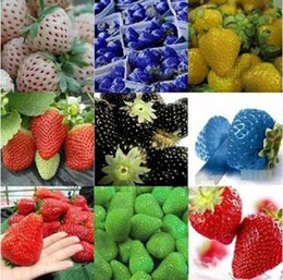 Wholesale New arrival kinds of strawberry seeds white yellow blue black red green great strawberries K07758