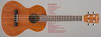 Wholesale Hot new Kala Ka t satin tenor ukulele inch Mahogany Body