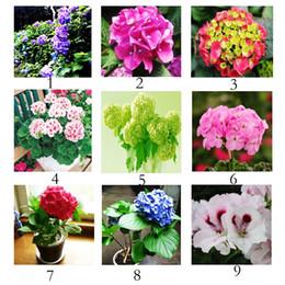 Wholesale 22 Colors High Germination Geranium Seeds Pelargonium Flower Bulk Seeds for Planting Beautiful Seeds RY1464