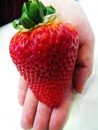 Wholesale - Super big strawberries seeds,300seeds flower seed,garden supply, perfume bonsai,home & garden,home decor