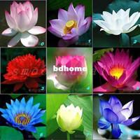 Wholesale Pack pack Seeds Lotus Seeds Flowers Seeds Colorful Bulbs Species Blooming Colors