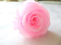 Wholesale natural preserved plant for flower Yunnan orginal place rose flower