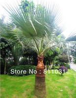 Tree Seeds Bonsai Outdoor Plants Wholesale-Hot selling 50pcs Palm Tree Seeds bonsai plant DIY home garden free shipping