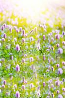 Wholesale 200CM CM backgrounds Garden beautiful sunshine photography backdrops photo LK