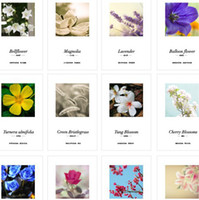 Cheap Iron Boxed 30 pcs cards set inside The Language of flowers Lovely Cute postcards Christmas Birthday Greeting Cards Love Gifts