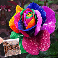rainbow rose seeds - Perennials Beautiful Flowering Roses Rose Seeds Rainbow Colors SV003023