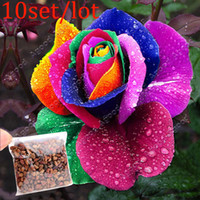 Wholesale 10set Perennials Beautiful Flowering Roses Rose Seeds Rainbow Colors SV003023