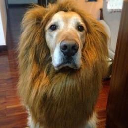 Большие костюмы для собак Онлайн-Бесплатная доставка Pet костюм кошки Halloween одежды необычные платья до Льва Грива парик для крупных собак